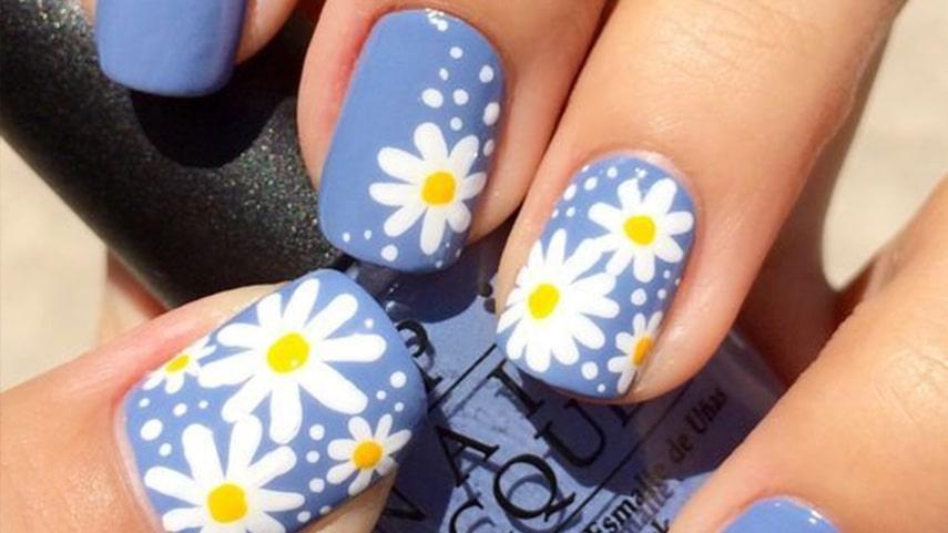 Hoa cúc trên nền xanh cho đôi tay thêm xinh xắn